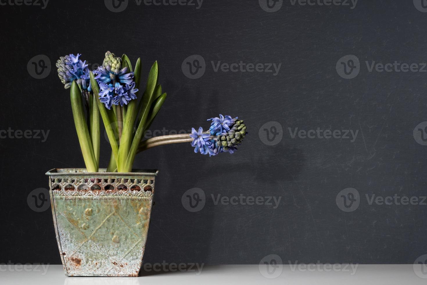 jacintos azuis em uma panela velha na mesa foto