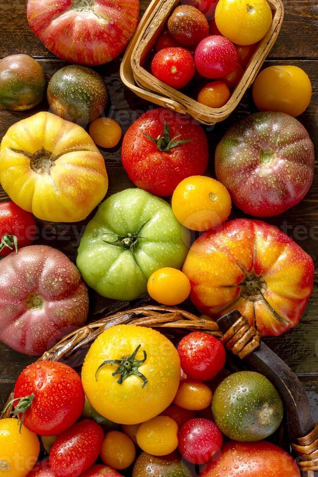 variedade de tomates frescos da herança foto