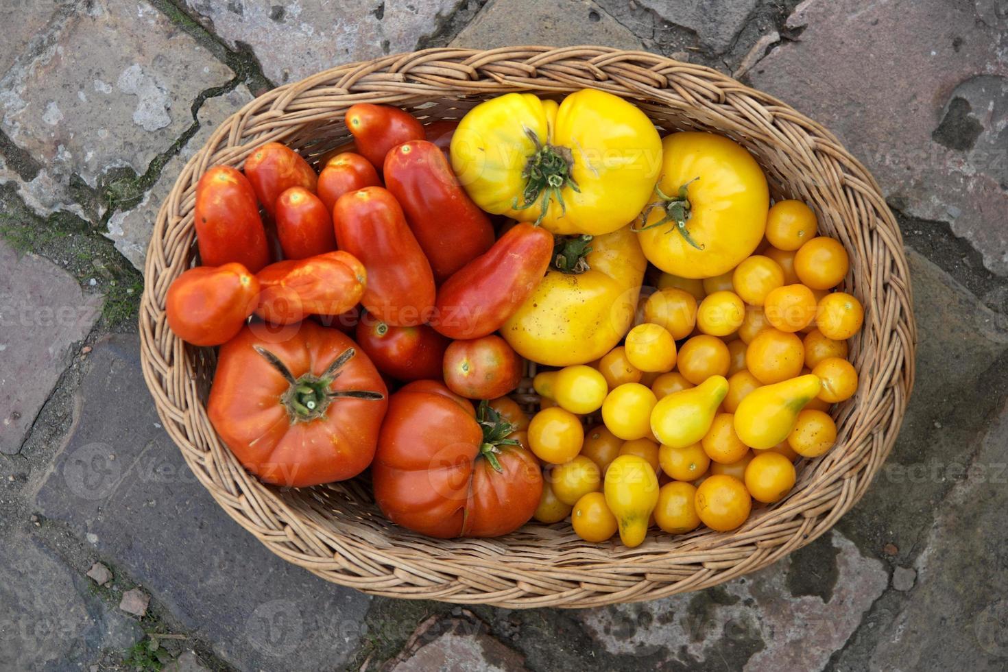 cesta cheia de tomates frescos foto