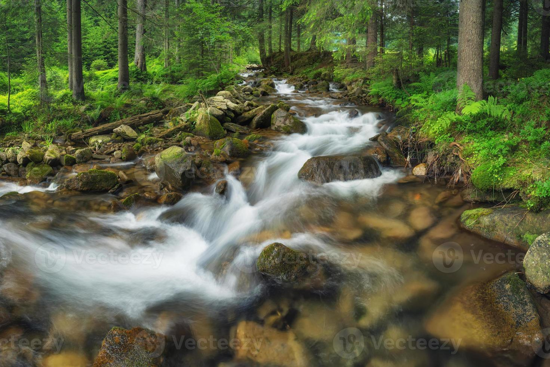 rio da floresta foto