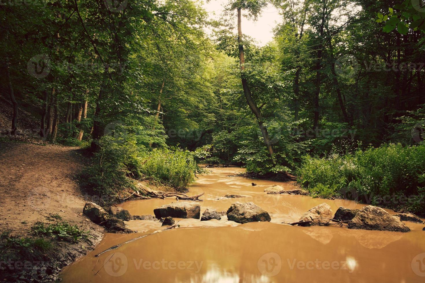riacho de verão foto