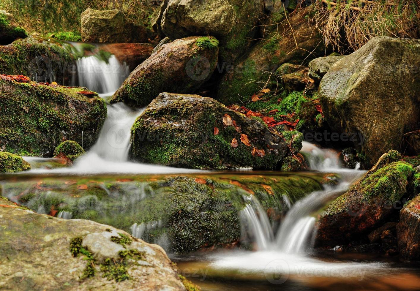 Spring Creek foto