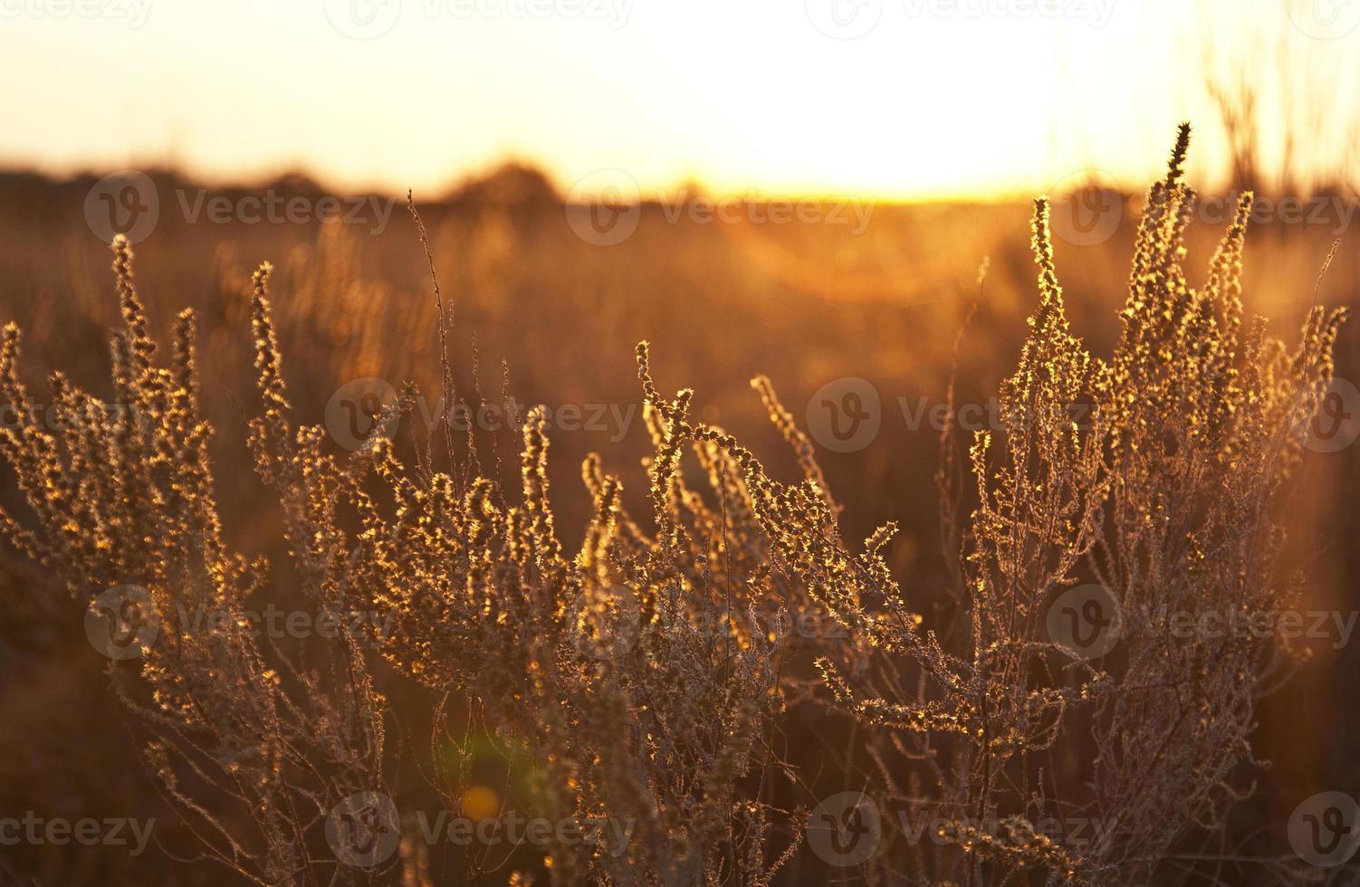 paisagem de arbusto em chamas foto