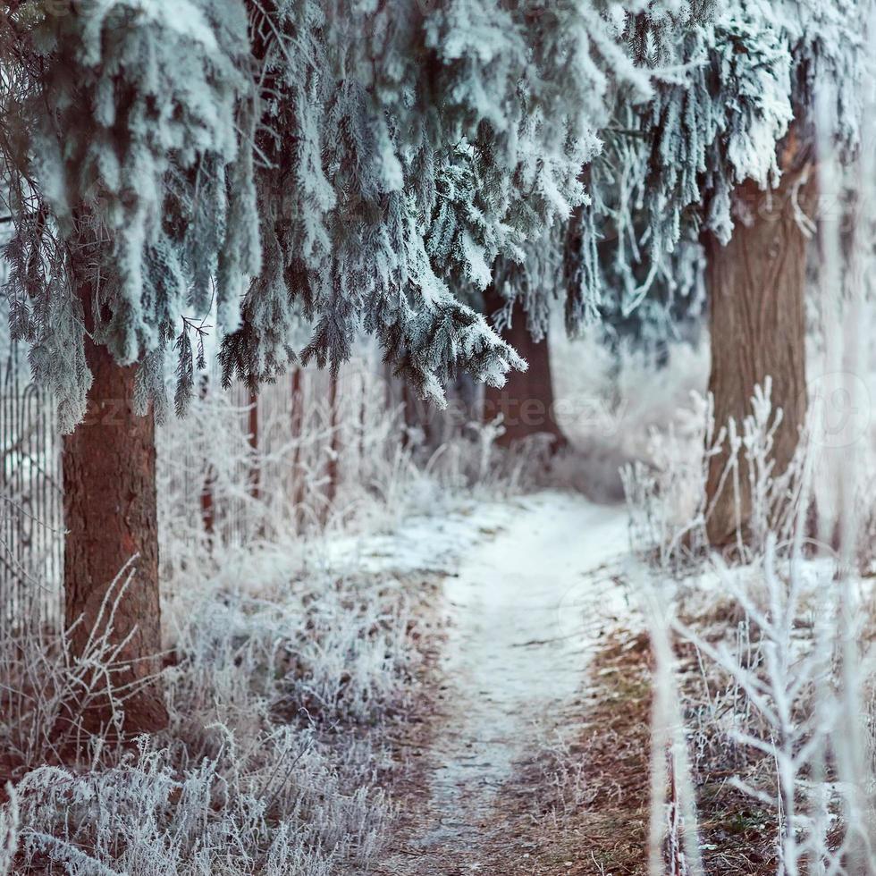 fundo de inverno foto