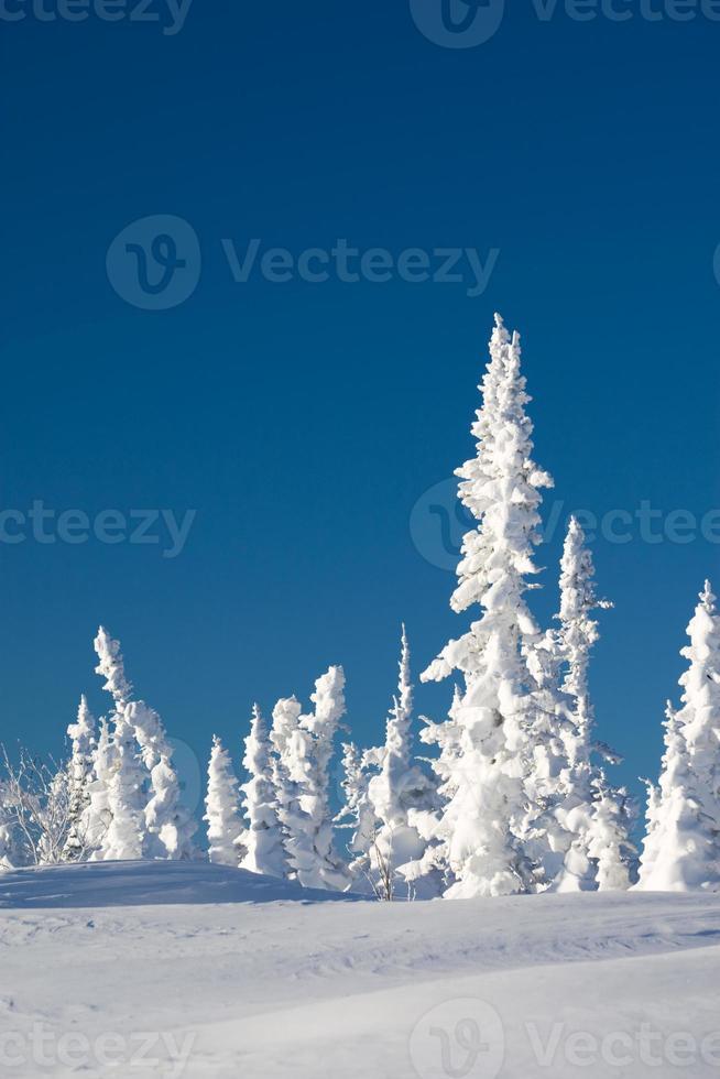 conto de fadas do inverno foto