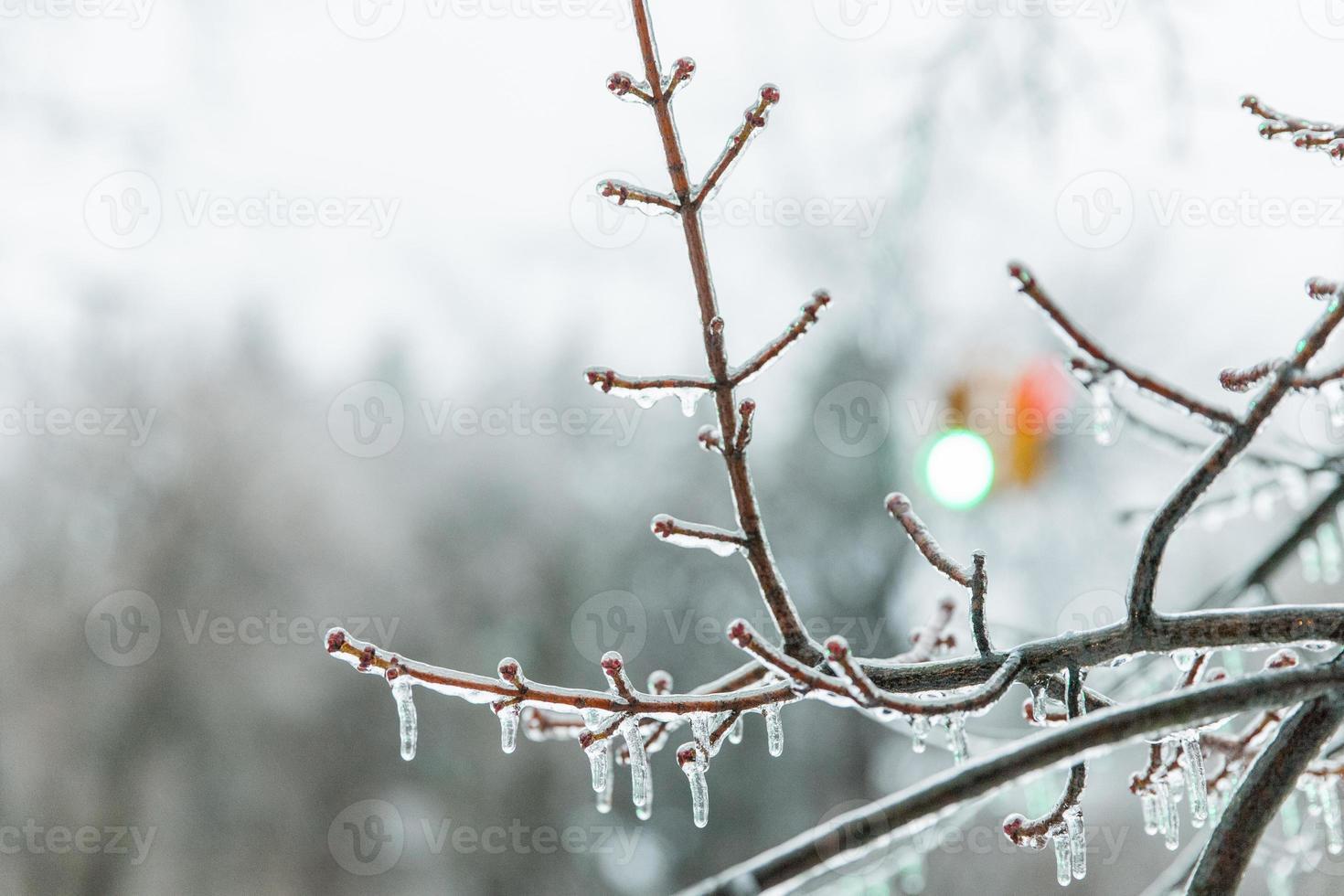 luz de paragem de inverno foto