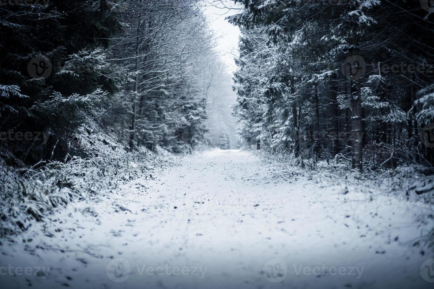 caminho na floresta de inverno foto