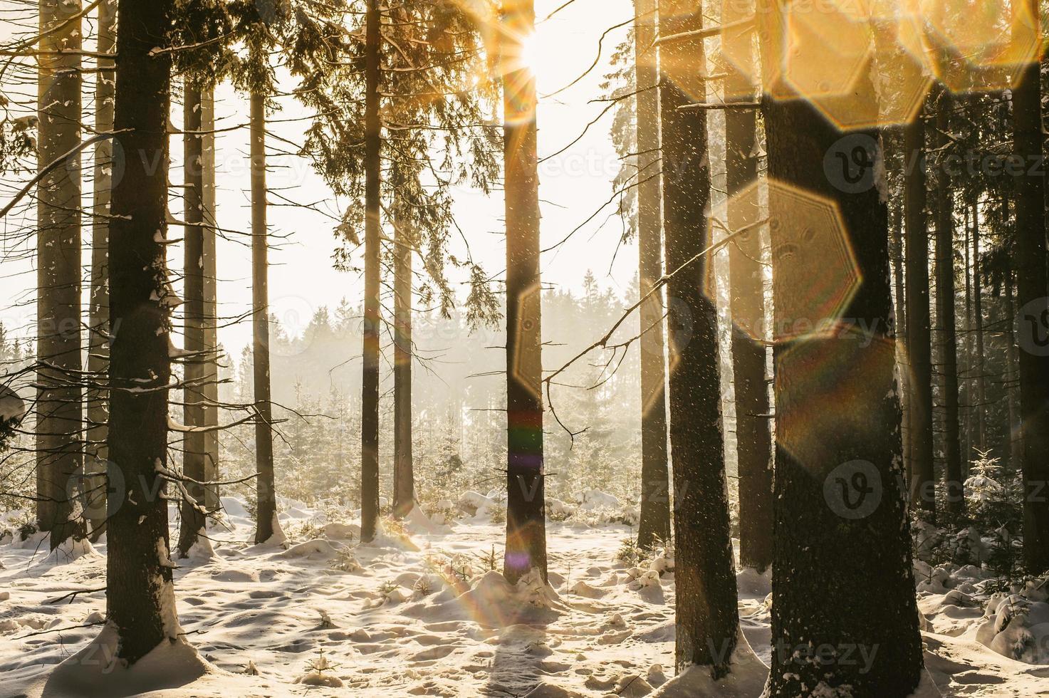 floresta de inverno com manchas de lente foto