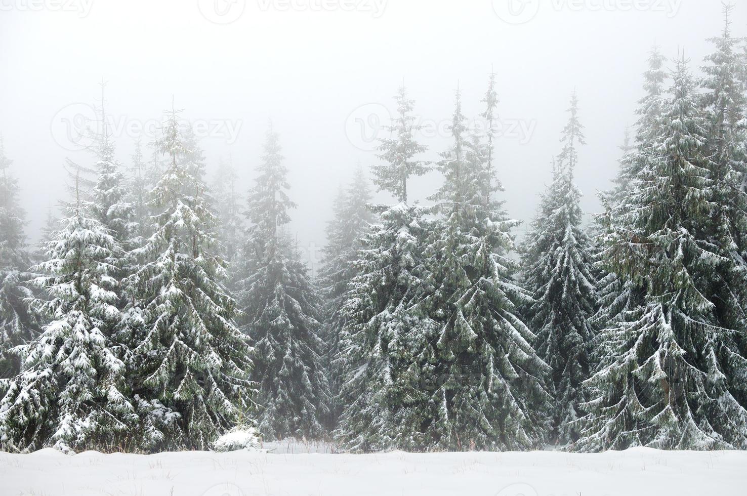 floresta de inverno no meio do nevoeiro foto