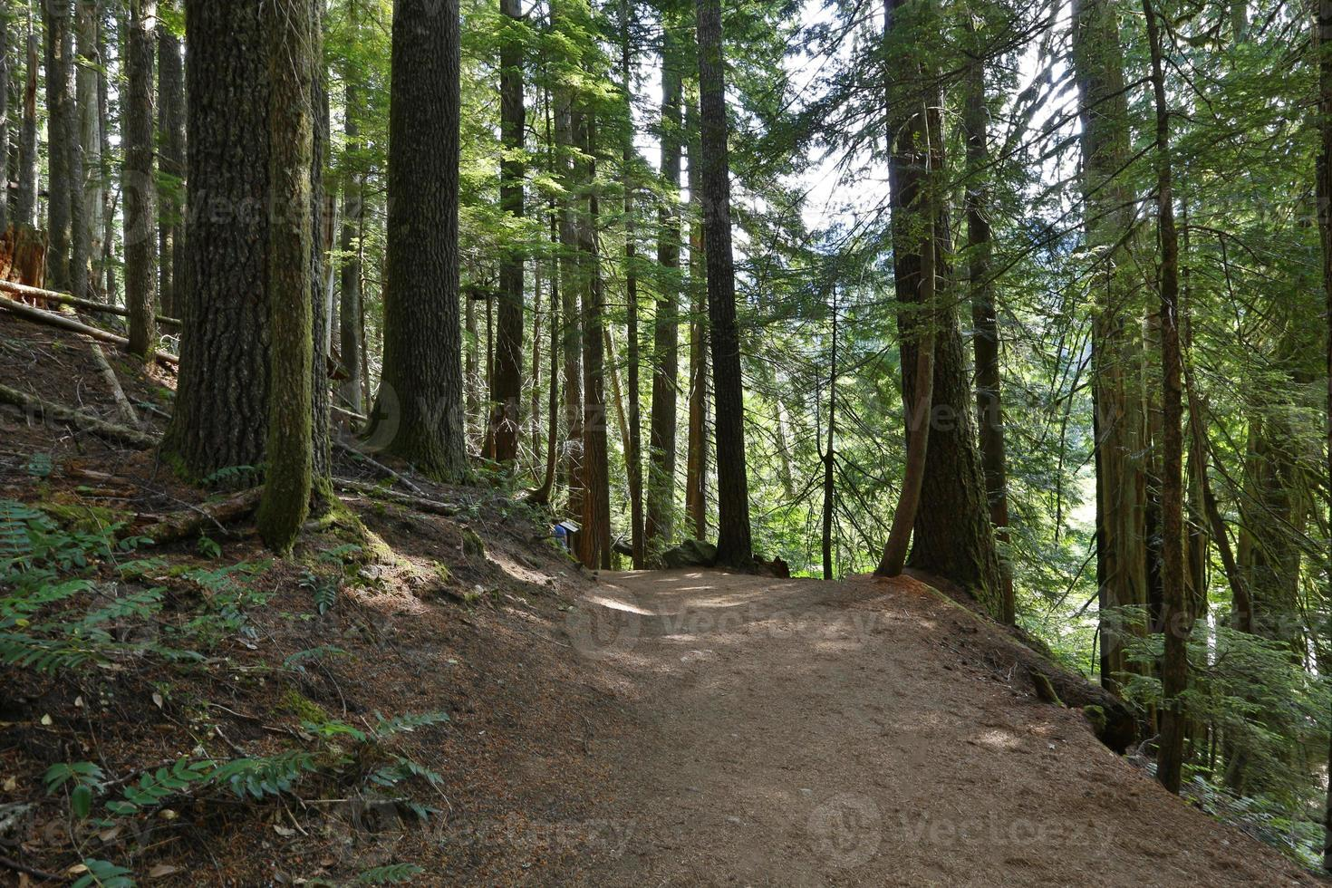 bosque da trilha dos patriarcas foto