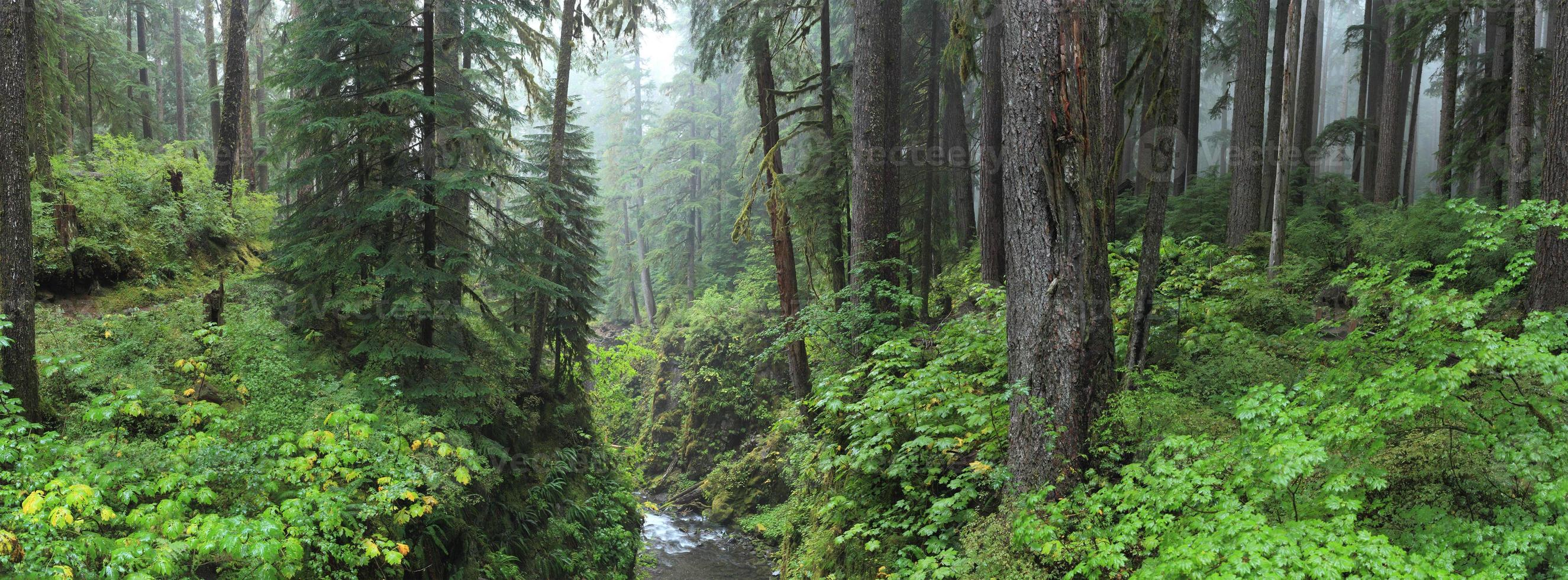 floresta tropical hoh foto