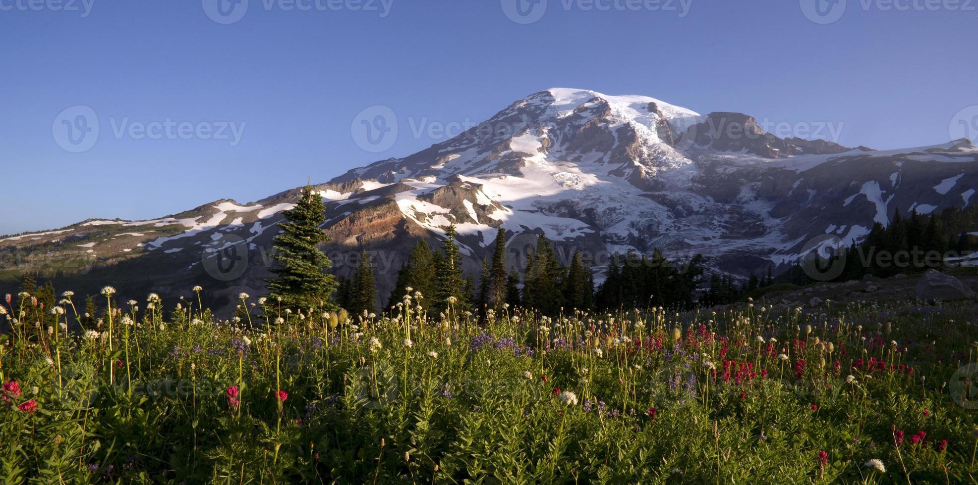 flores do fim do verão mt. trilha do horizonte do parque nacional mais chuvoso foto