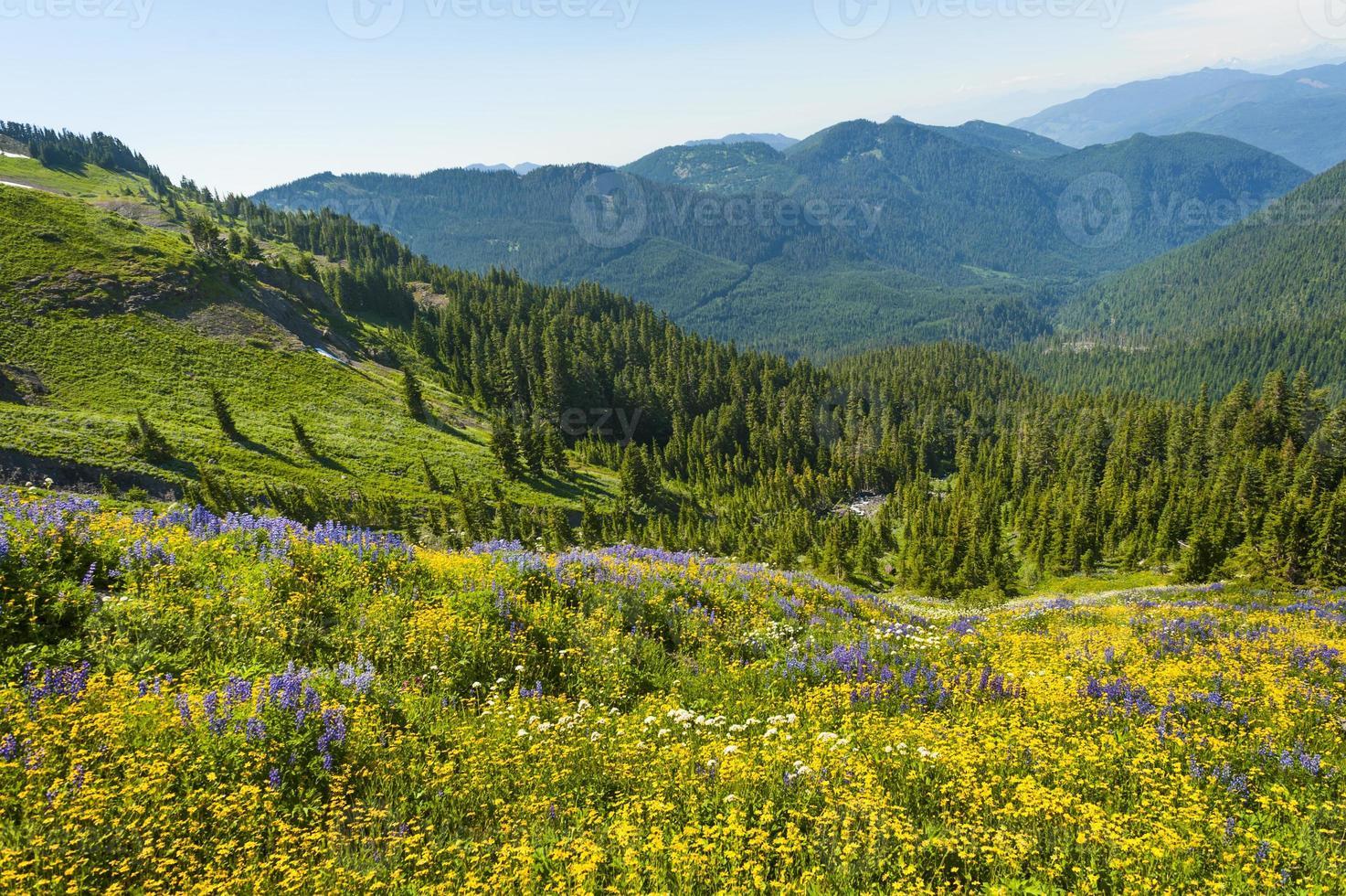 flores silvestres alpinas foto