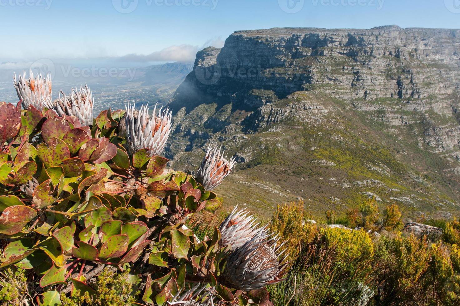 paisagem de montanha mesa com flores em cape town, áfrica do sul foto
