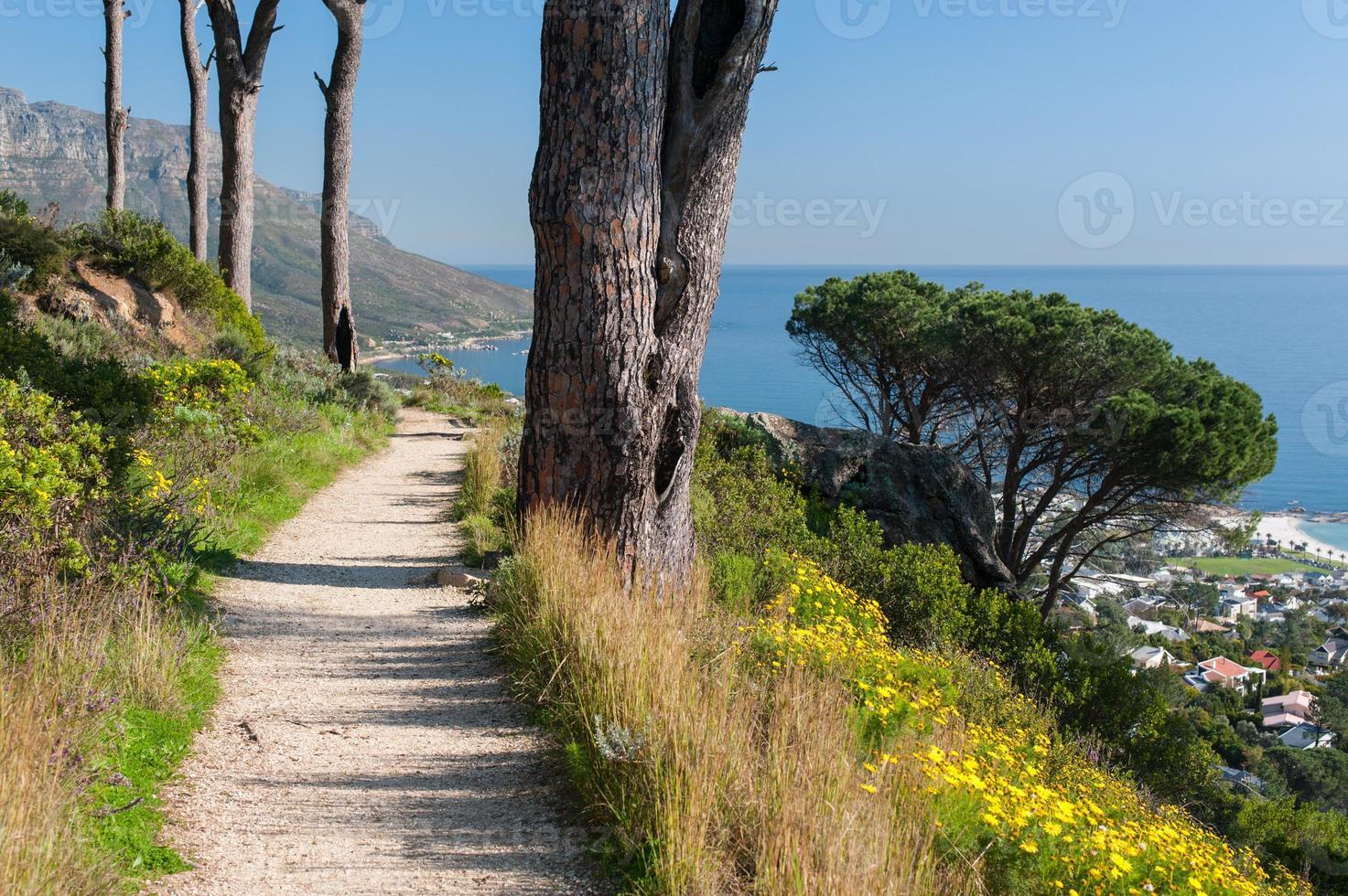 paisagem costeira com trilha de cascalho e árvores foto