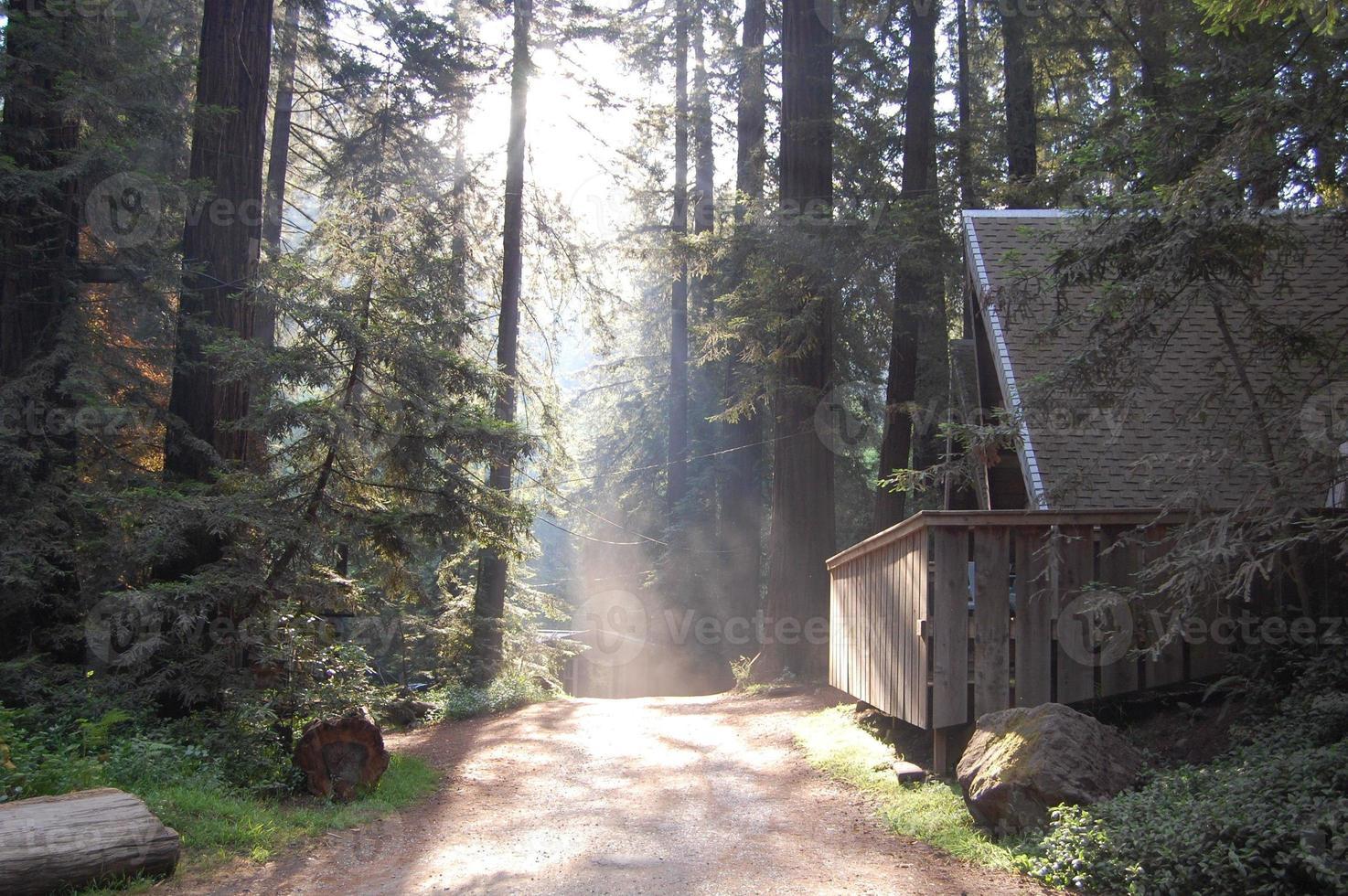 cabana na floresta californiana foto