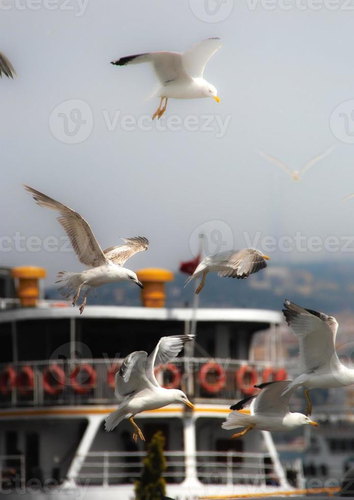 gaivotas loucas foto