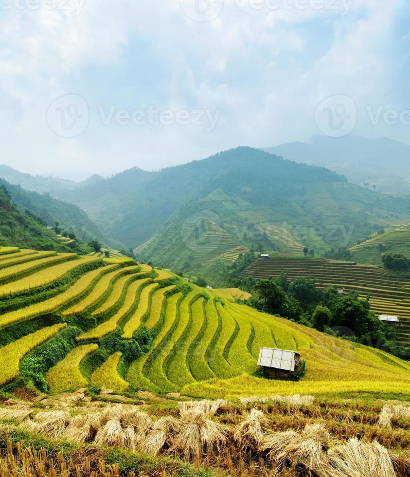 campos de arroz mu cang chai, vietnã foto