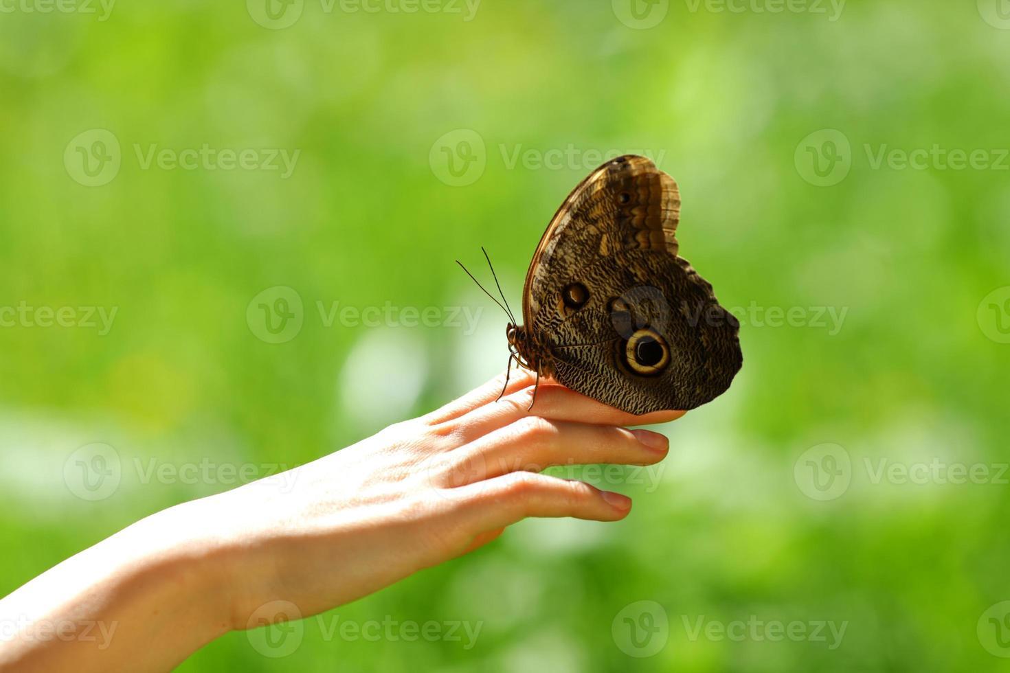 borboleta em uma mão feminina foto