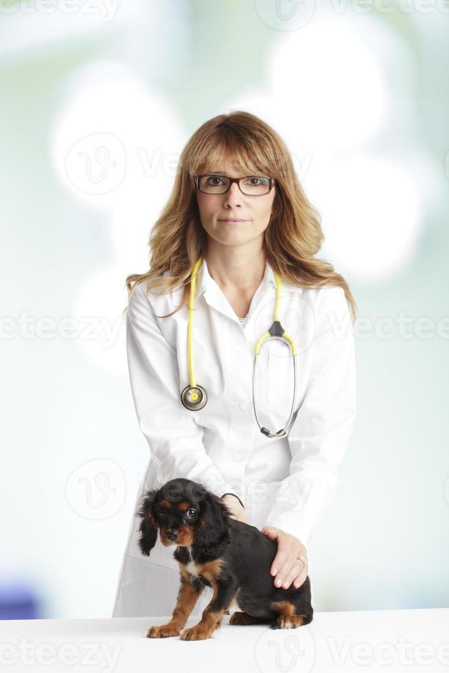 cachorrinho jovem e um veterinário feminino foto