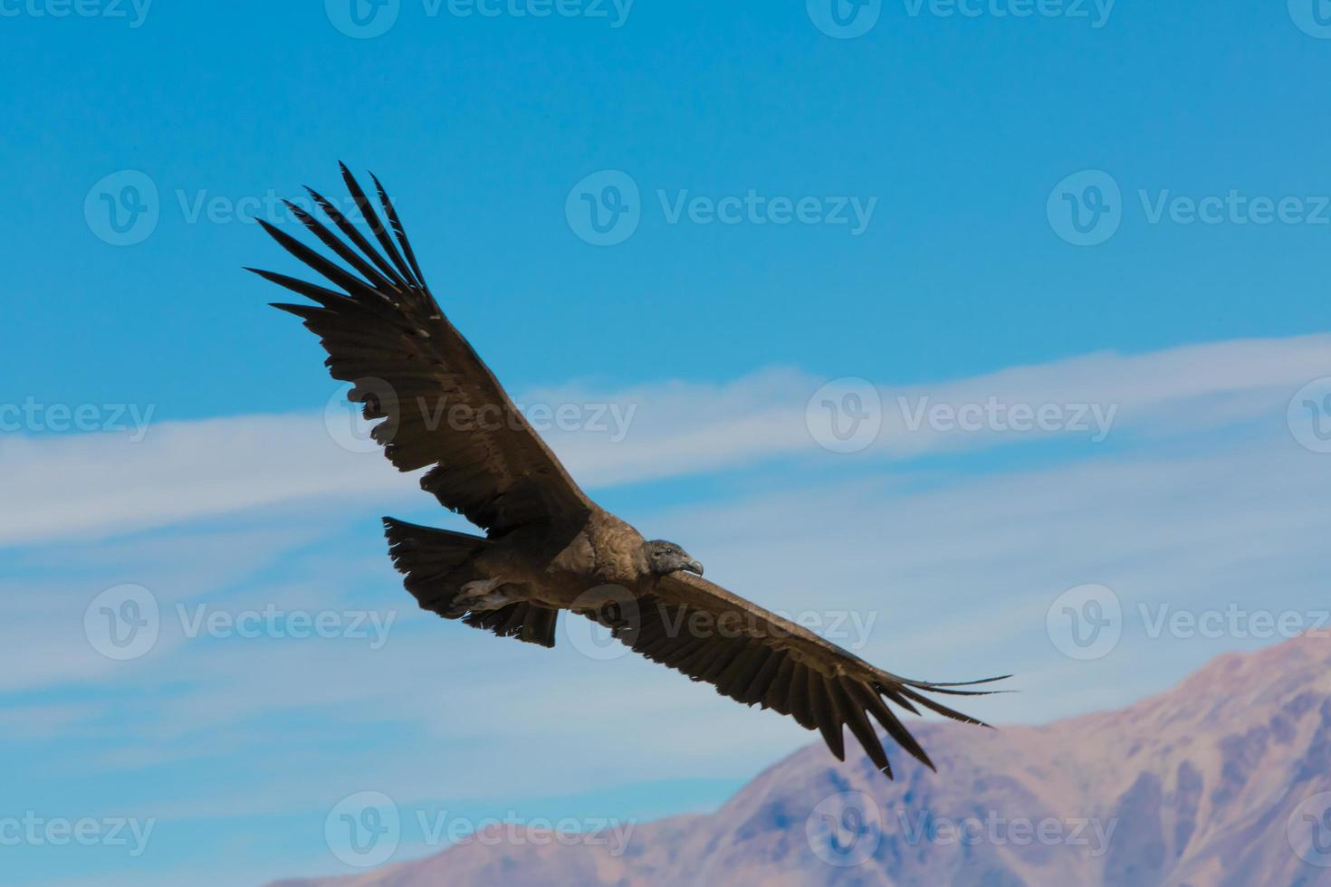 voando condor sobre colca canyon, peru, américa do sul. foto