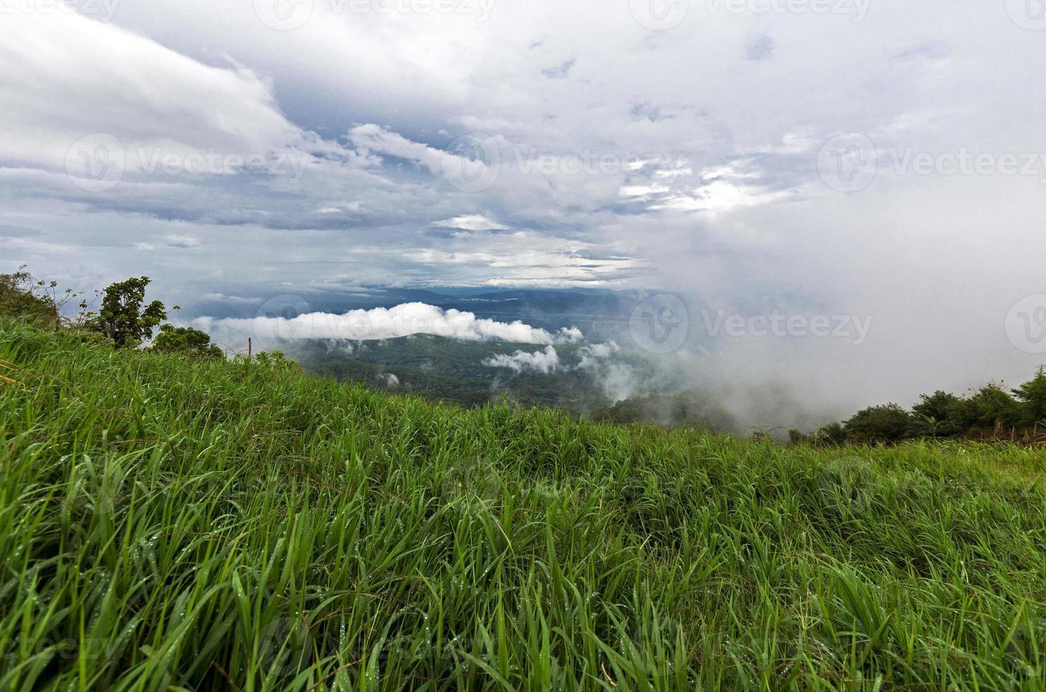 campo de plantação no pico na Tailândia foto