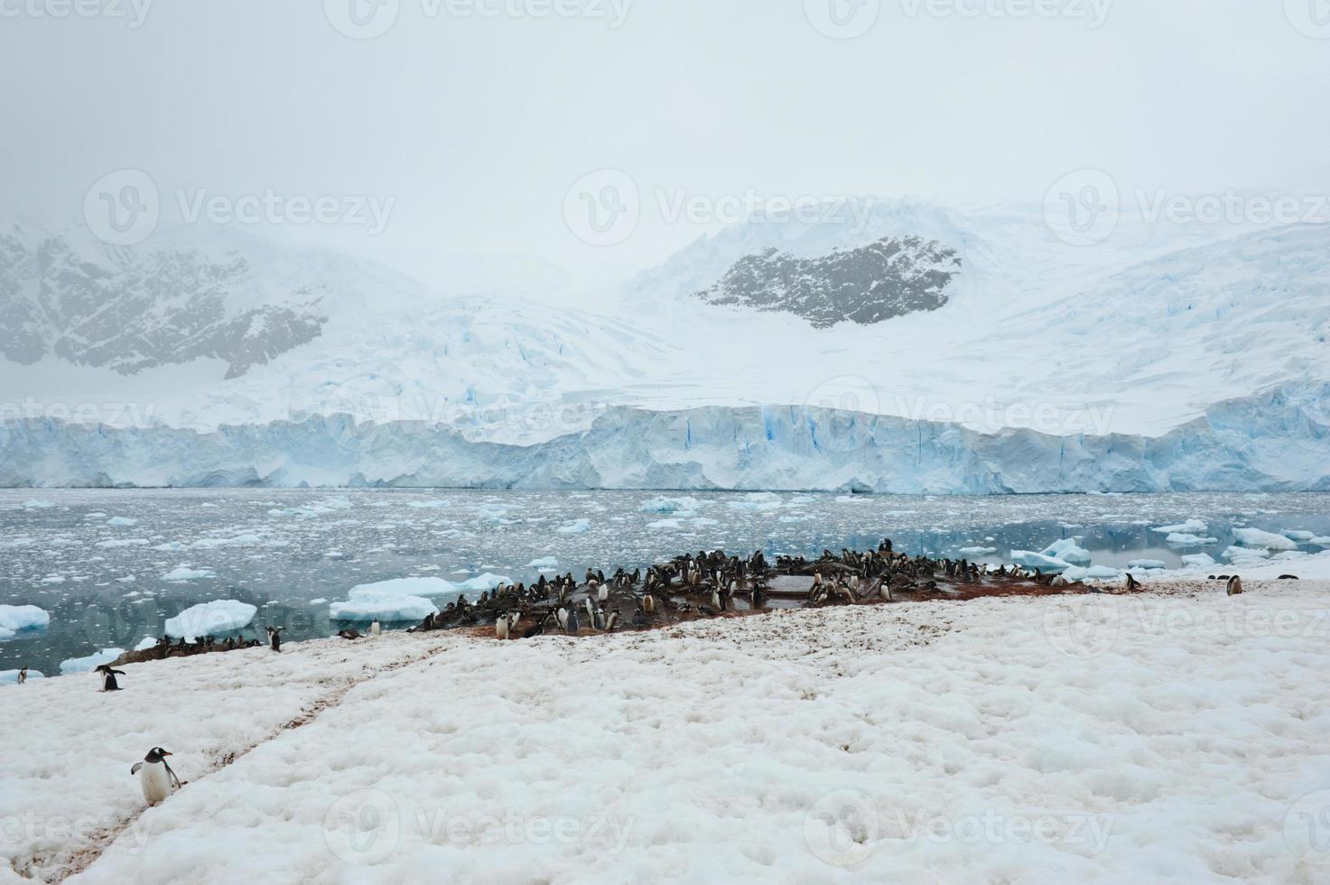 pinguins no porto de neko foto