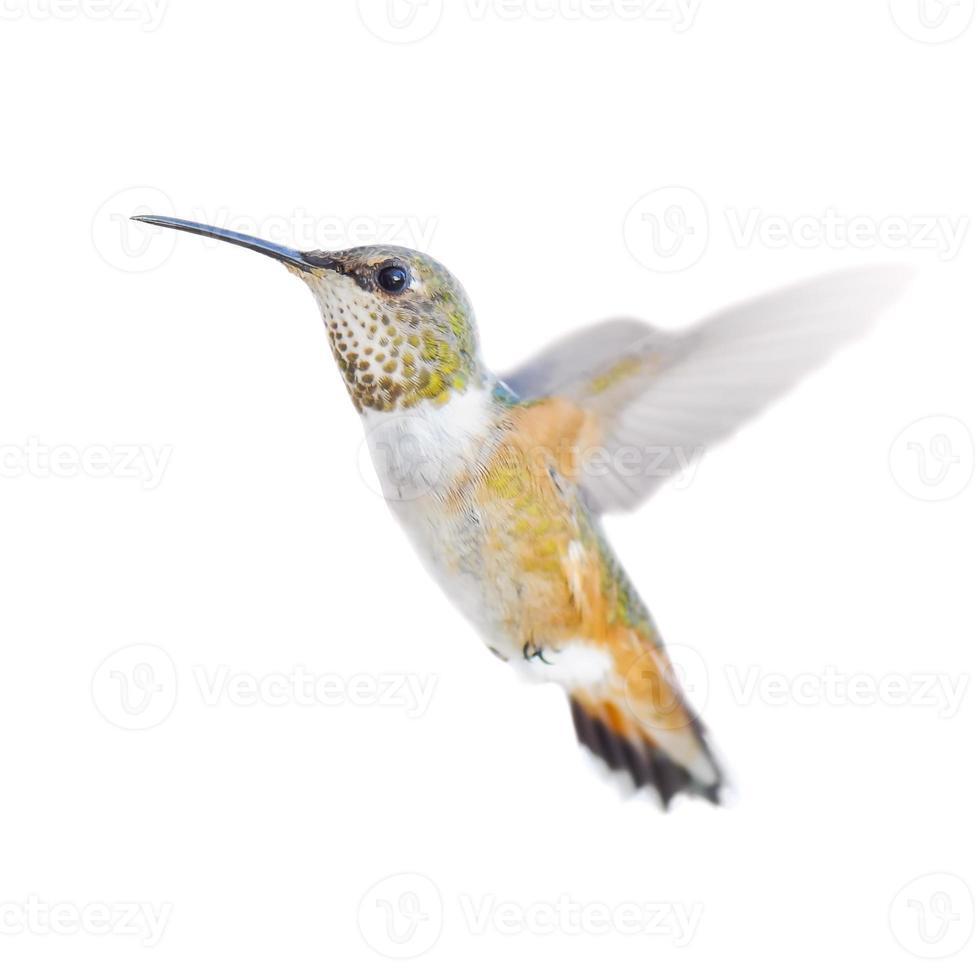 beija-flor ruivo em voo foto