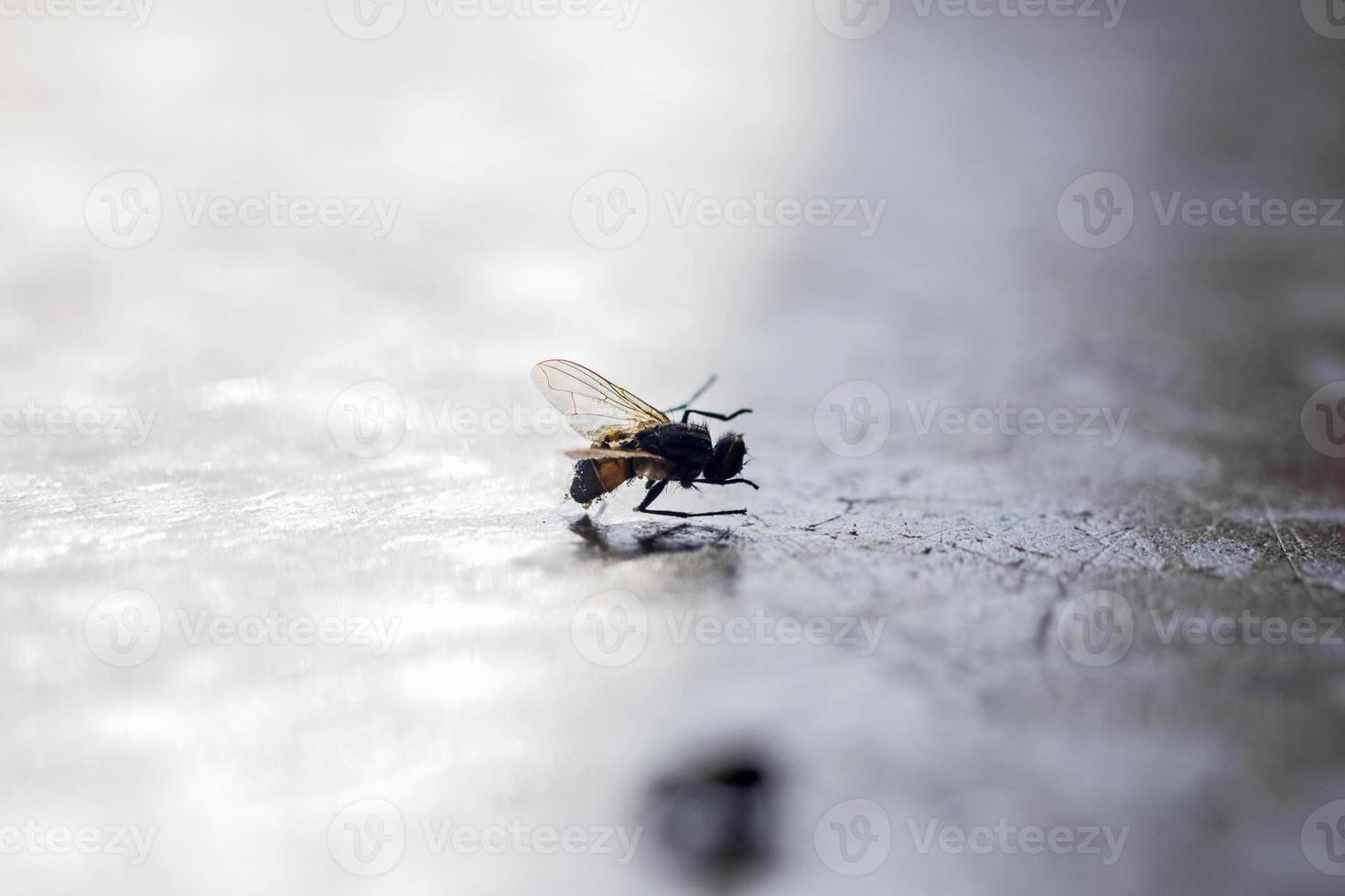 mosca de inseto em casa foto
