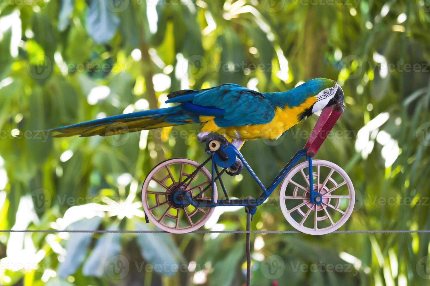 papagaio em uma bicicleta foto