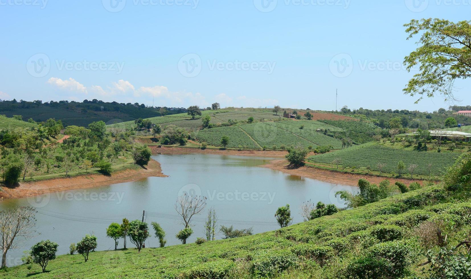 fazenda de chá em bao loc highland foto