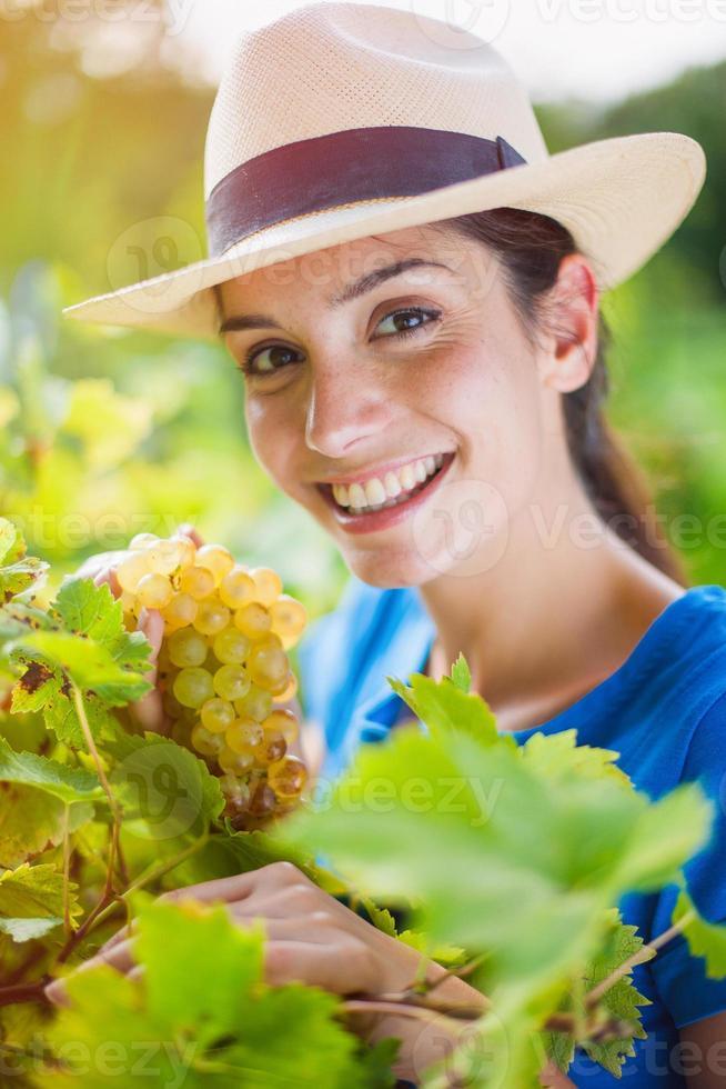 mulher colhendo uvas no jardim foto
