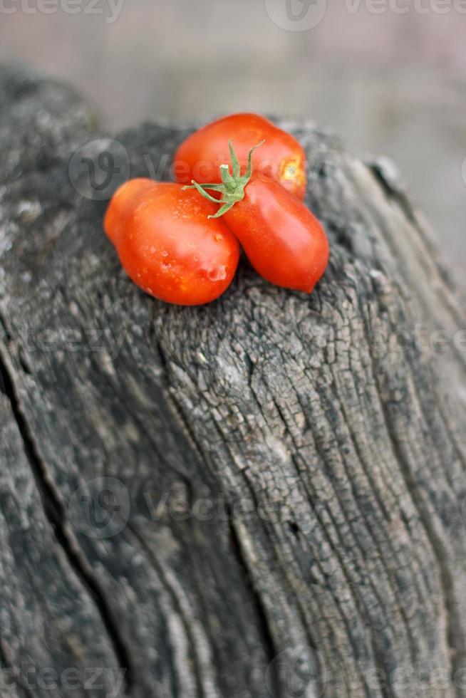 tomates em um log foto