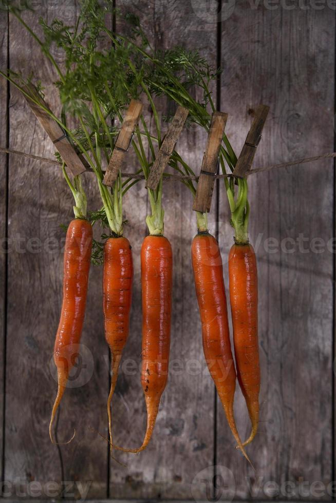 bando de cenouras foto