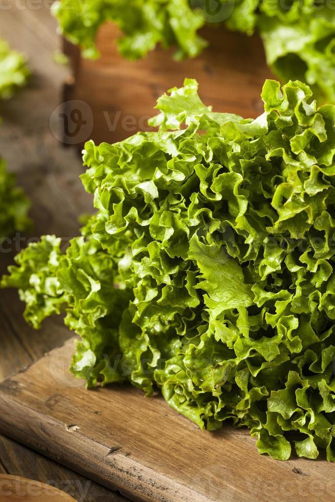 alface de folha verde orgânica saudável e fresca foto