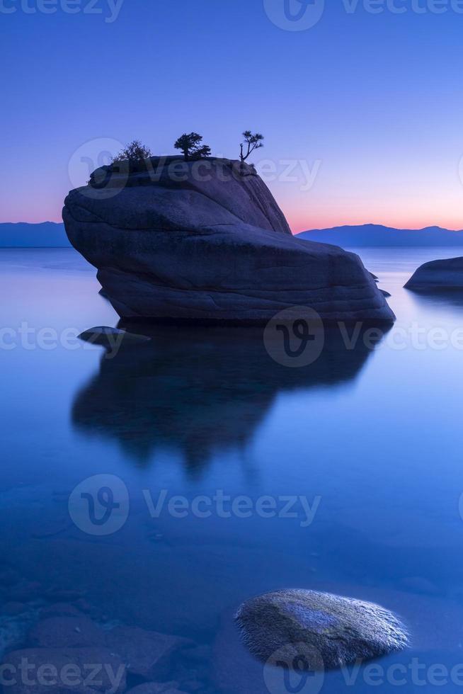 rock bonsai foto