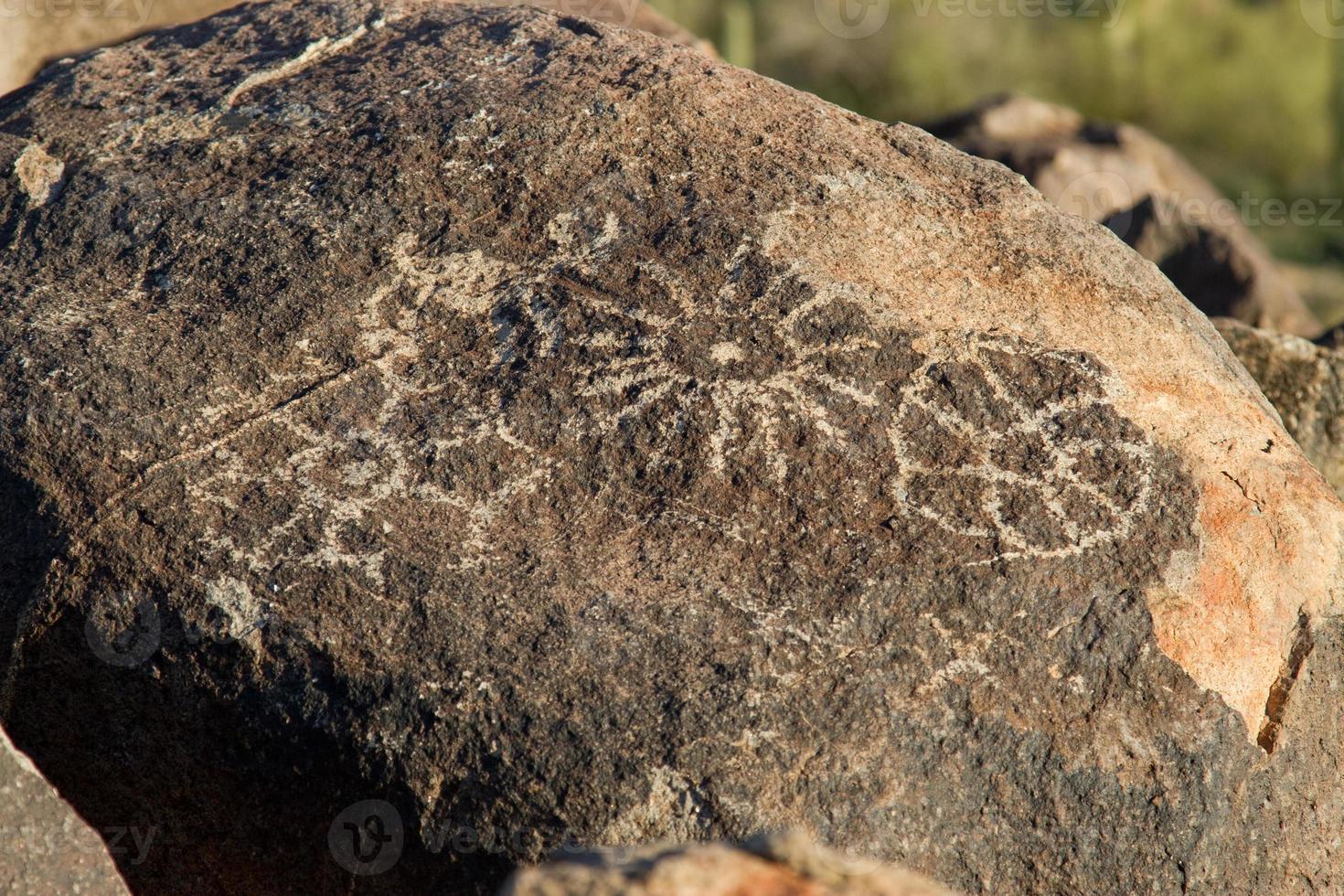 petroglifo foto