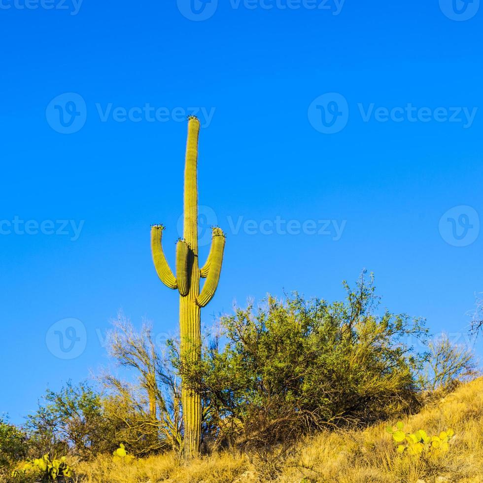 cacto verde no deserto foto