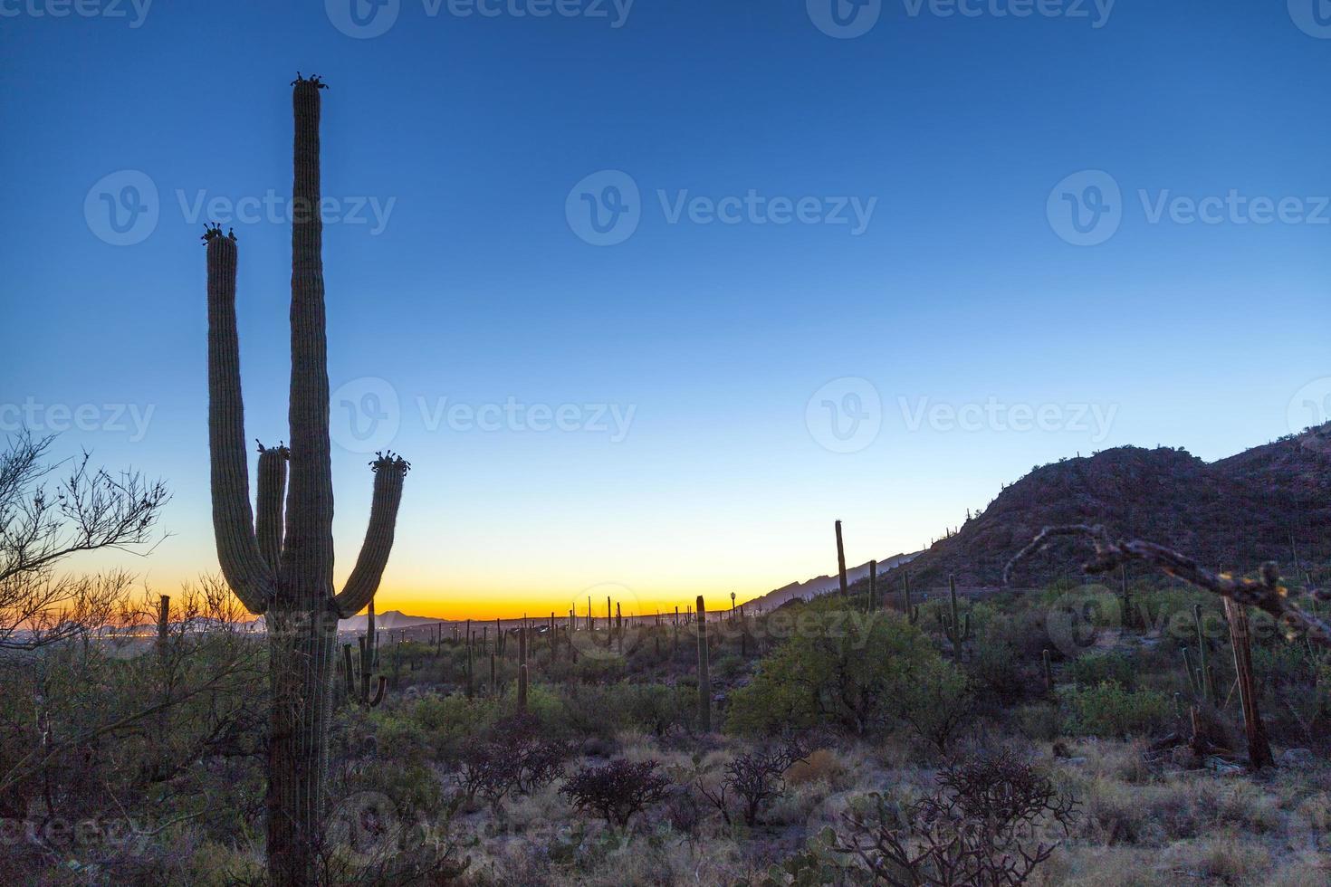 pôr do sol com cactos verdes lindos na paisagem foto