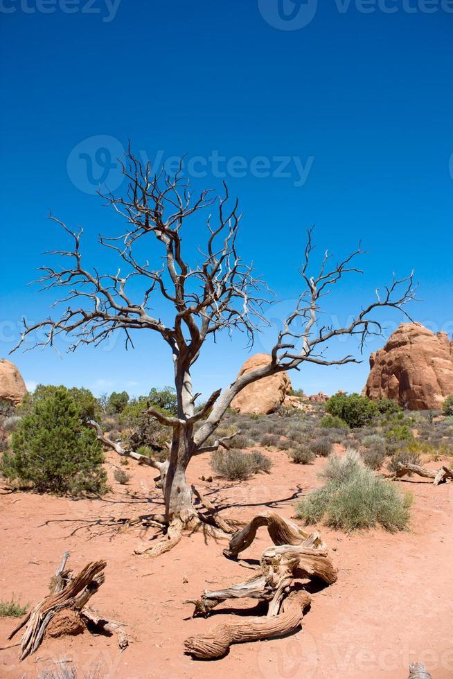 paisagem do deserto americano foto