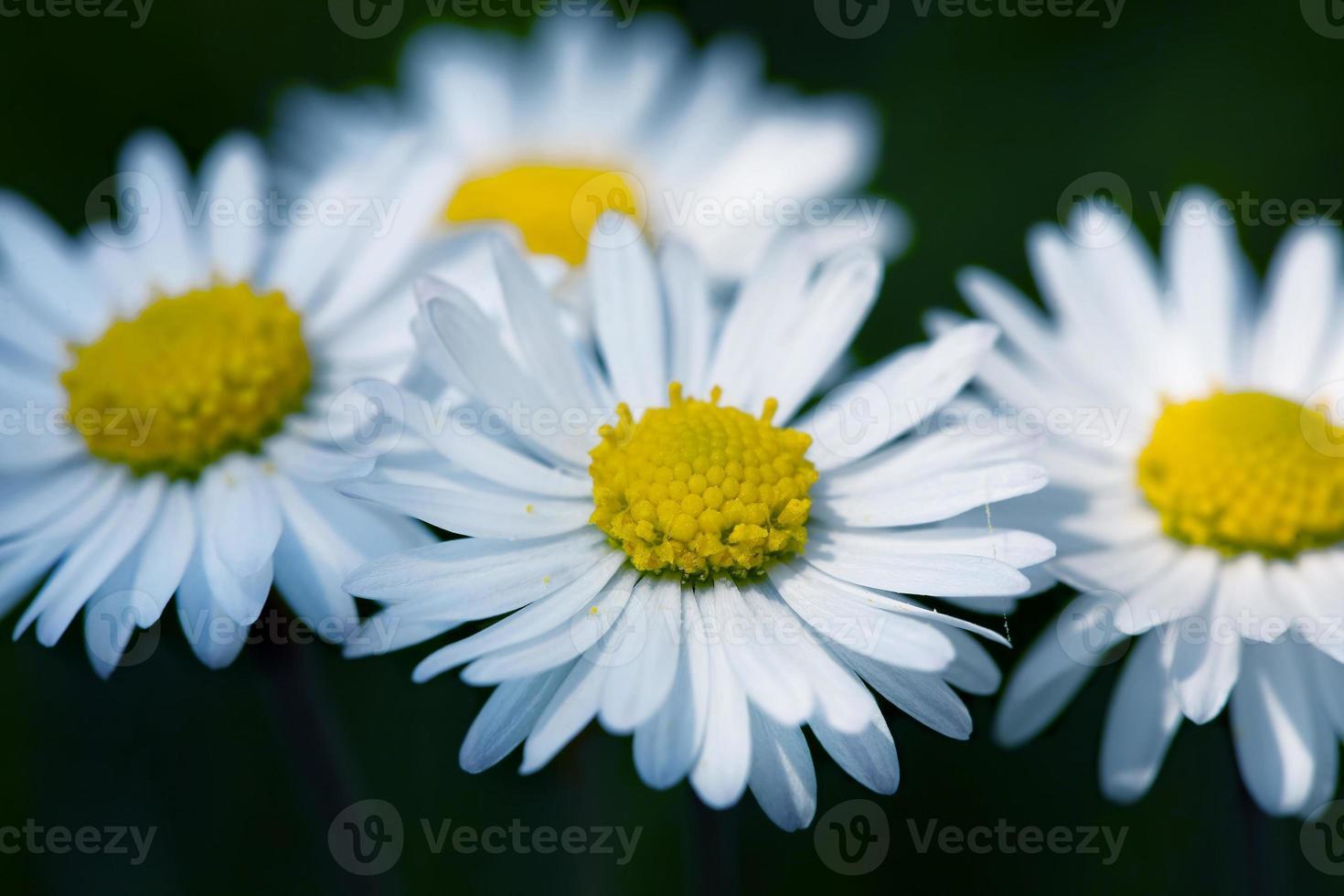 flores primavera foto