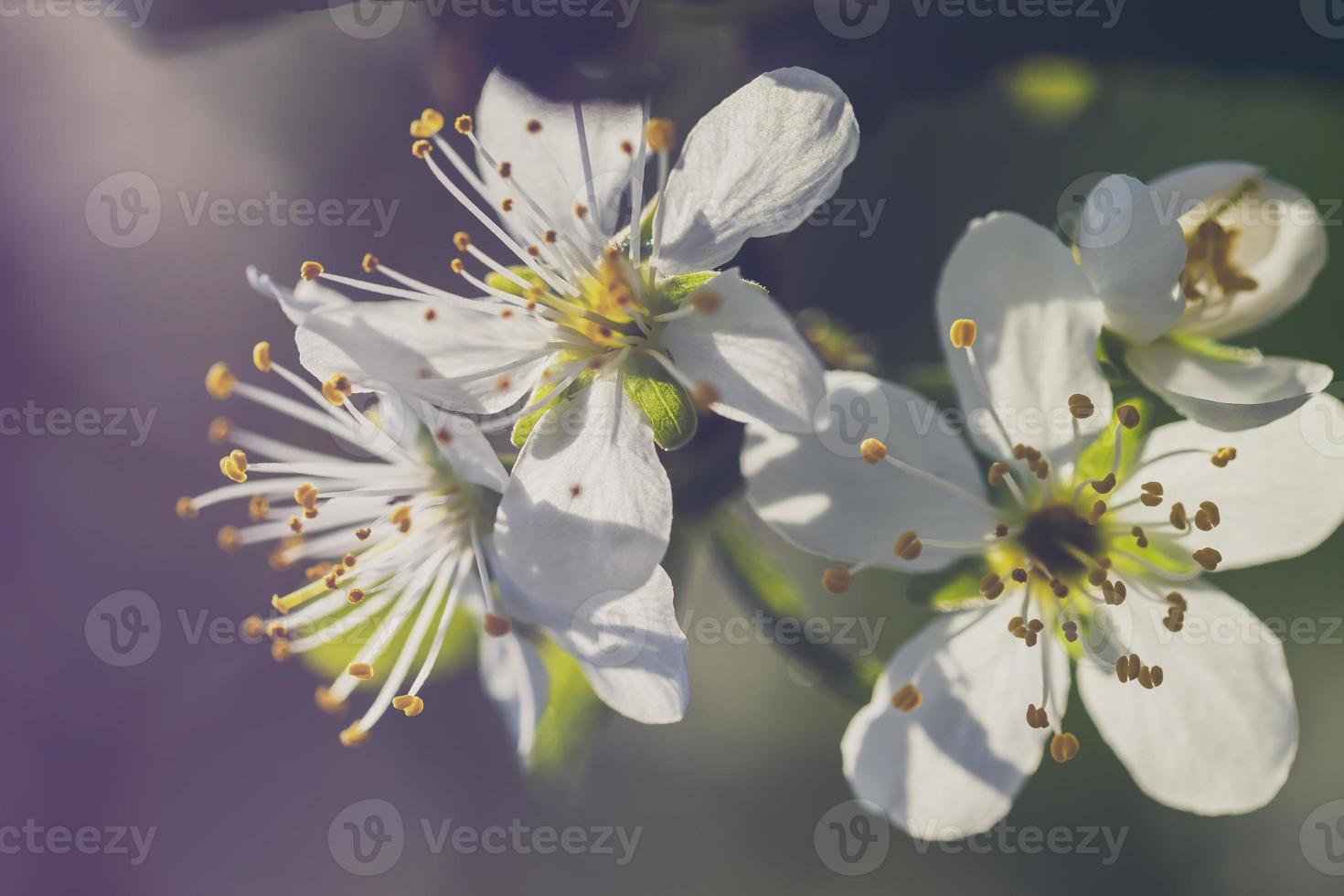 flor de primavera foto