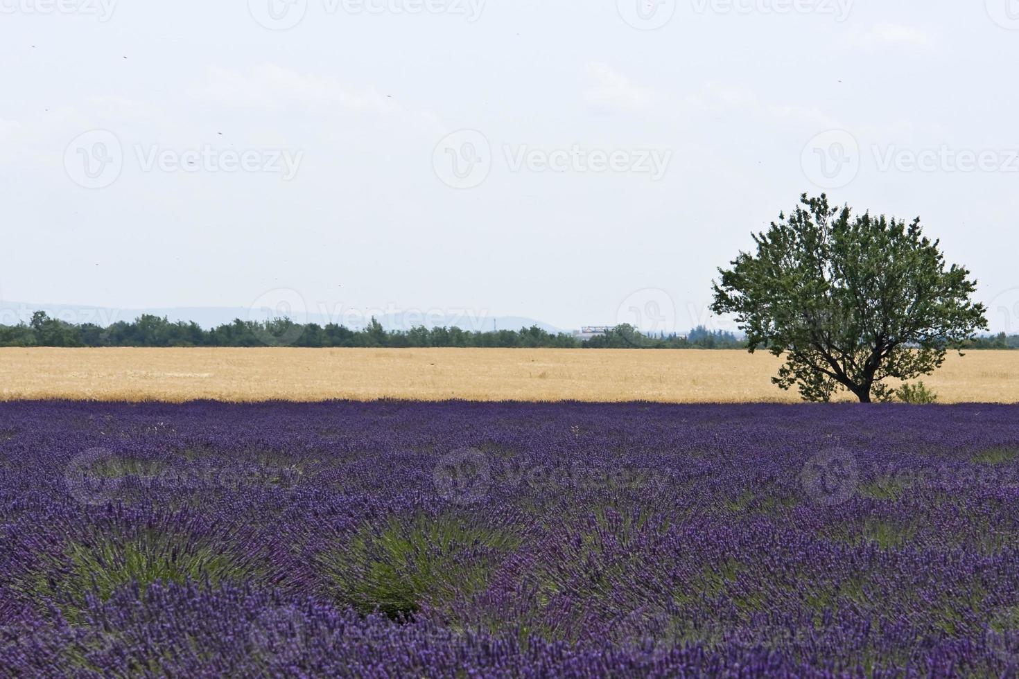 paisagem francesa colorida foto