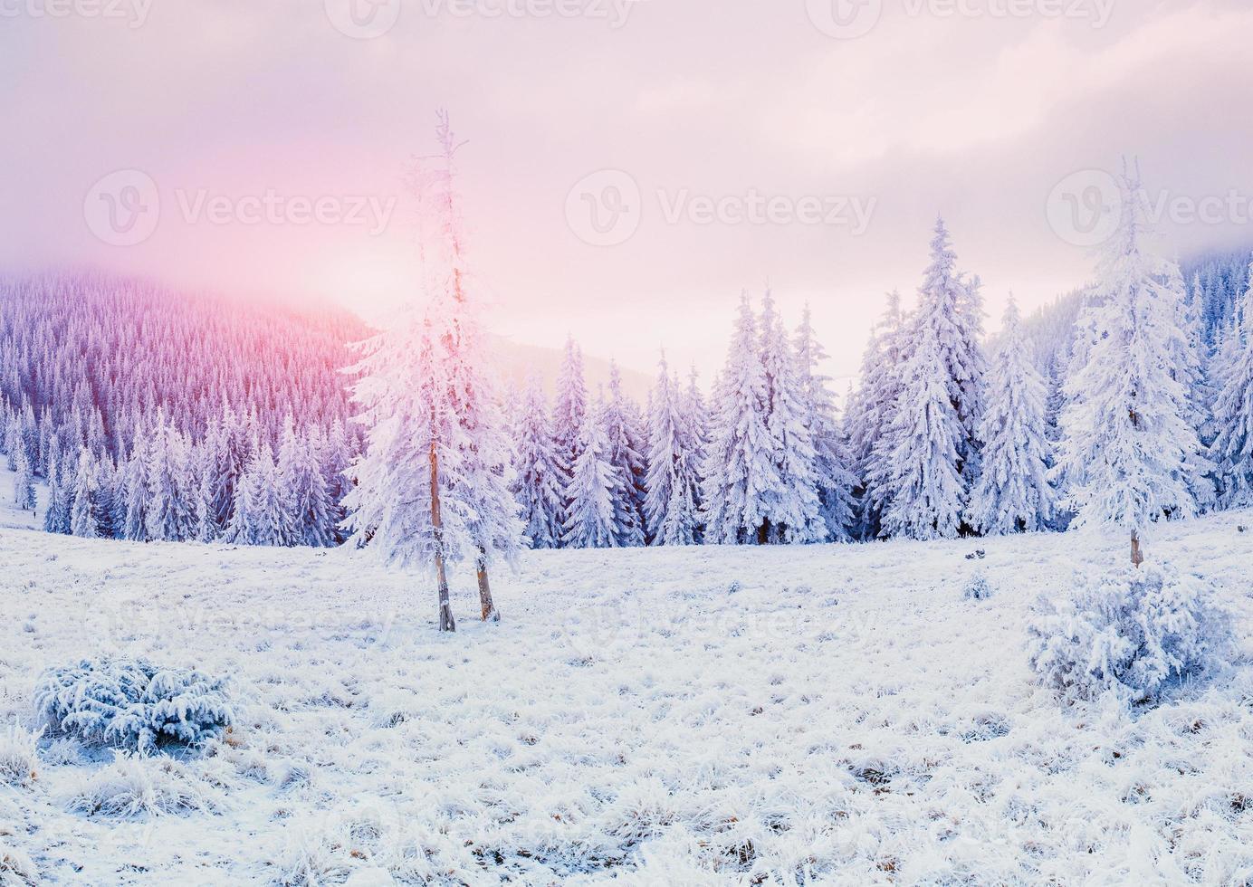 fabulosa paisagem de inverno foto