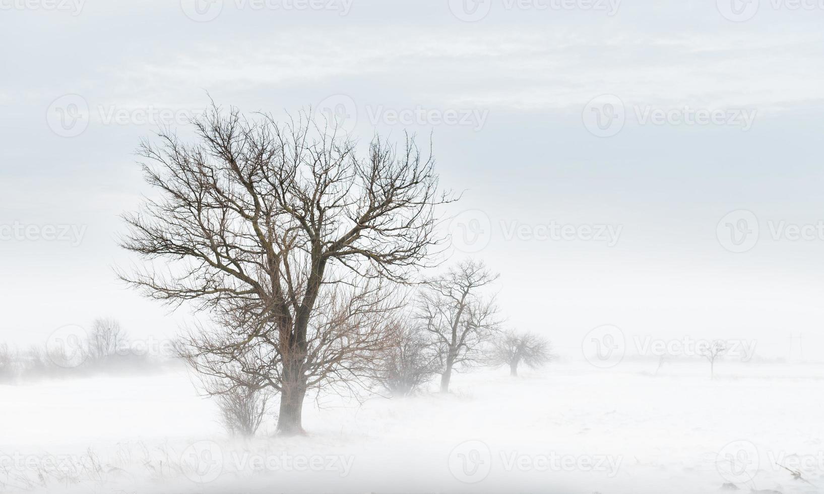 nevasca de inverno foto