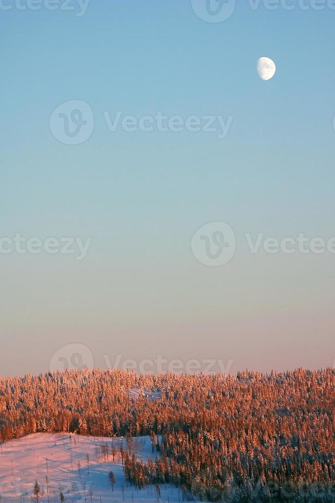 floresta de inverno bonito foto