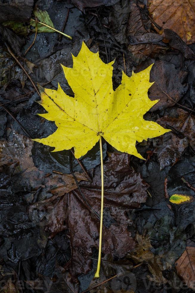 folha de inverno foto