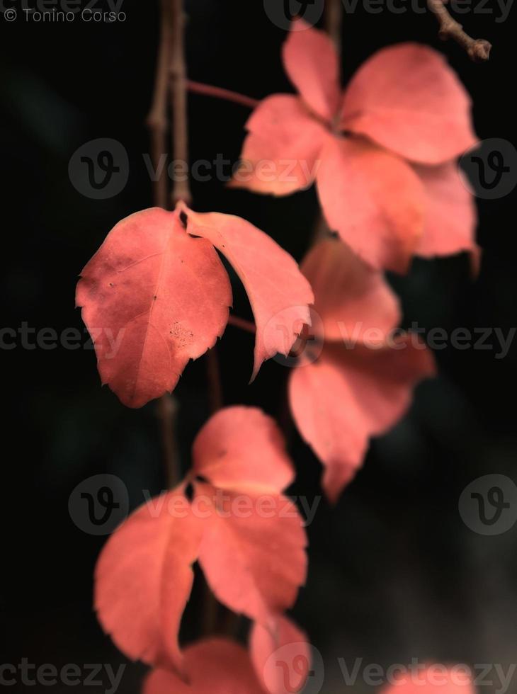 folhas no inverno foto