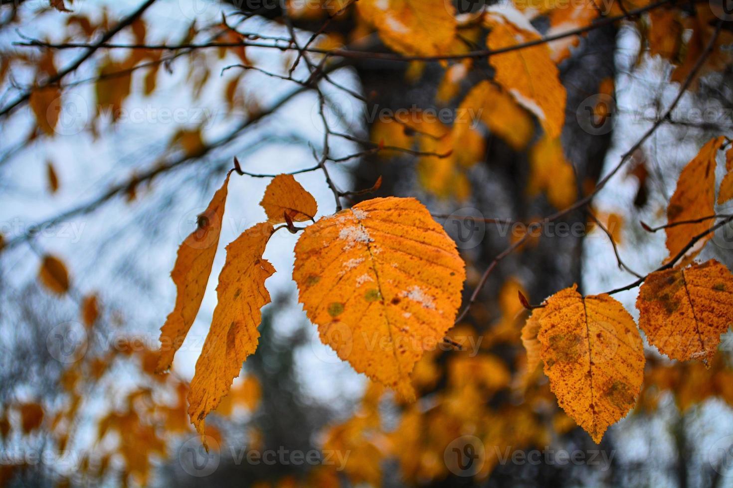 inverno muito cedo foto