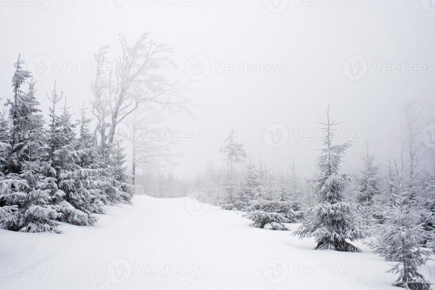caminho de inverno no meio do nevoeiro foto